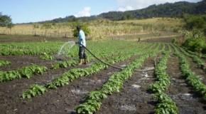 Segunda entrega de bonos productivos para agricultores y crianceros afectados por la sequía.