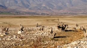 Bono de sequía 2013