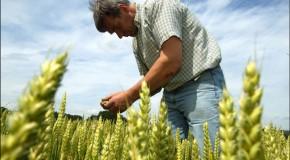 Subsidio al empleo de Agricultores